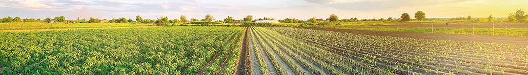 Learn More About Organic Farming